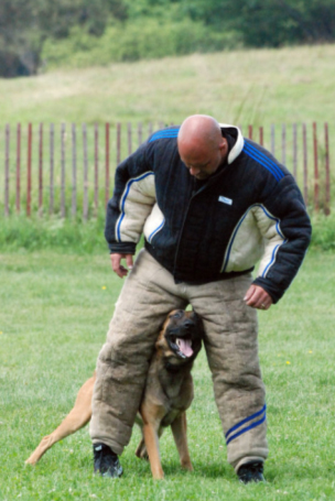 Protection Dogs, Police K9, Detection dogs, Drug Detection, massachusetts