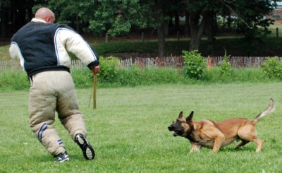 police k9, police dogs, narcdogs, state police, drug dogs, detection, detecting