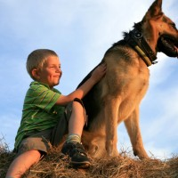 elite family guardian, family protection dogs for sale