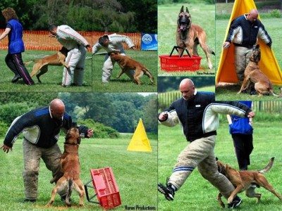police decoy training, decoy school, police dogs, police k9, canine protection