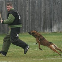 police canine training, decoy school, police dogs, police k9, drug dogs, drug detection, bomb dogs, explosive detection