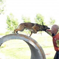 Police K9 Training Arizona