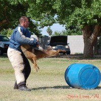Police Canine Training