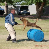 Police K9 decoy school training