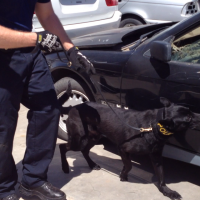 Dual Purpose Police K9 Training and Sales