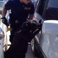 Dual purpose Police K9 searches narcotics